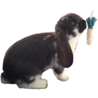 Cute Pika Bunny