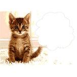 Talking kitten.jpg