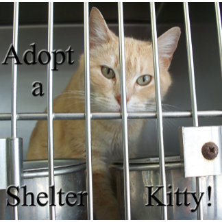 Shelter Pets Adopt