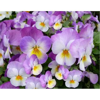 Dainty Violas