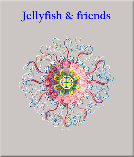 Jellyfish & friends