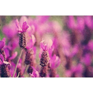 Lavender Garden Photo with Damask Swirls