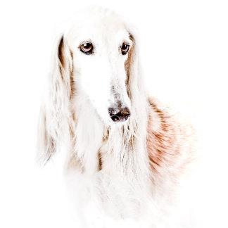 Beautiful Saluki Dog