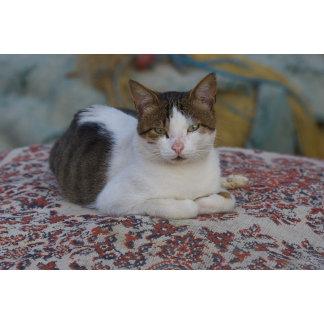 Cat in Marina of Kusadasi along the Aegean Sea,