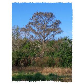 Florida Bald Cypress vertical no text
