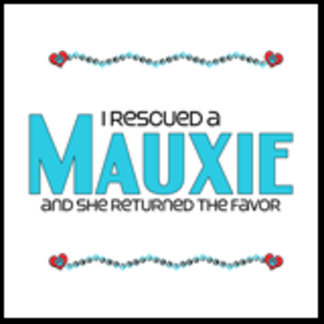 I Rescued a Mauxie (Female Dog)