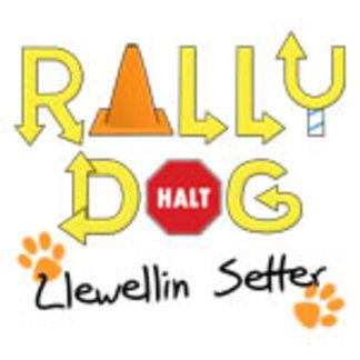 Llewellin Setter Rally Dog
