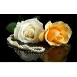 roses-yellow-white-pearl-900x1440.jpg