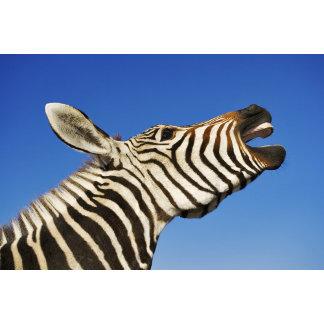Harnas Wildlife Sanctuary, Namibia, Southern
