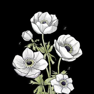 Botanical | Anemone