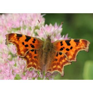cards butterflies