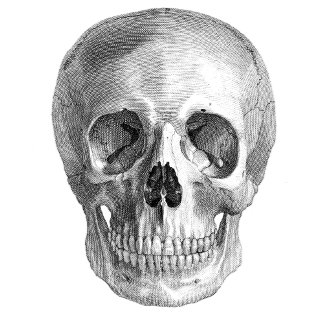 Vintage Skull head sketch drawing Halloween