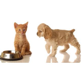 HOME-Pets