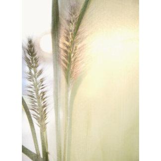 """foxtail grass and sun poster print"""