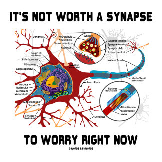 It's Not Worth A Synapse To Worry Right Now