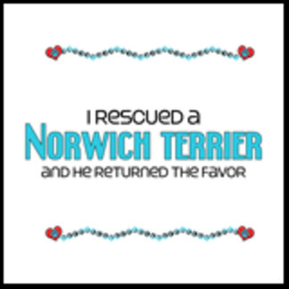 I Rescued a Norwich Terrier (Male Dog)