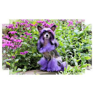 Chinese Crested - Pink Garden - Sheeba