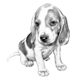 Beagle Puppy dog
