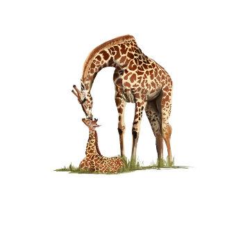 Giraffe and Baby Calf Kissing