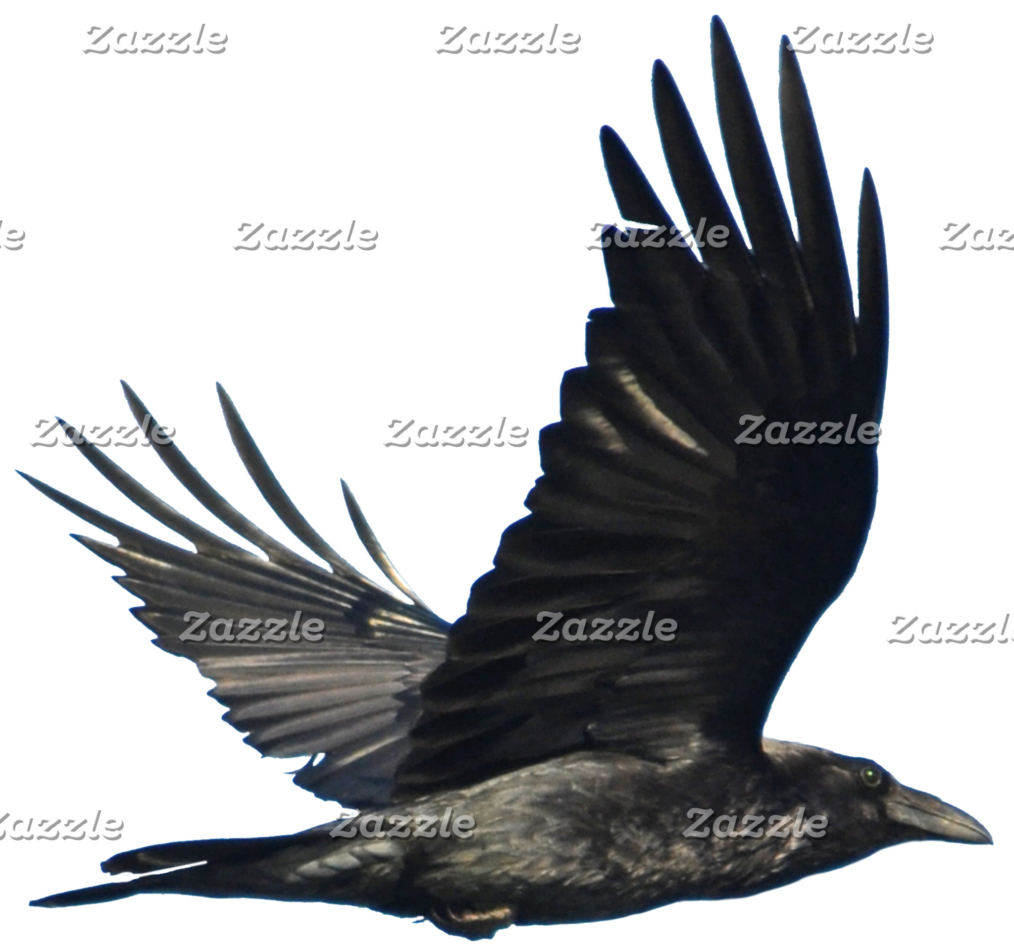 RAVENS and CROWS - Black or White