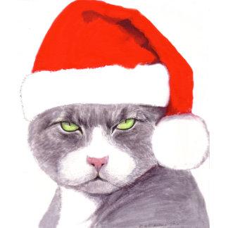 Humbug Cat