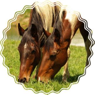 Paint Horse Love