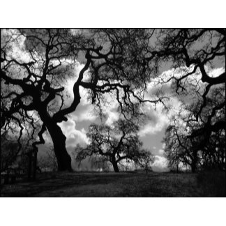 Haunted Black and White Trees