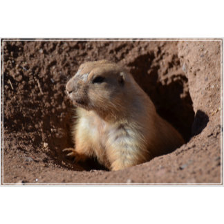 Prairie Dog in Hole