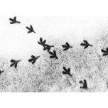 Bird's Feet for zaz.png