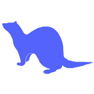 Ferret (10)   blue
