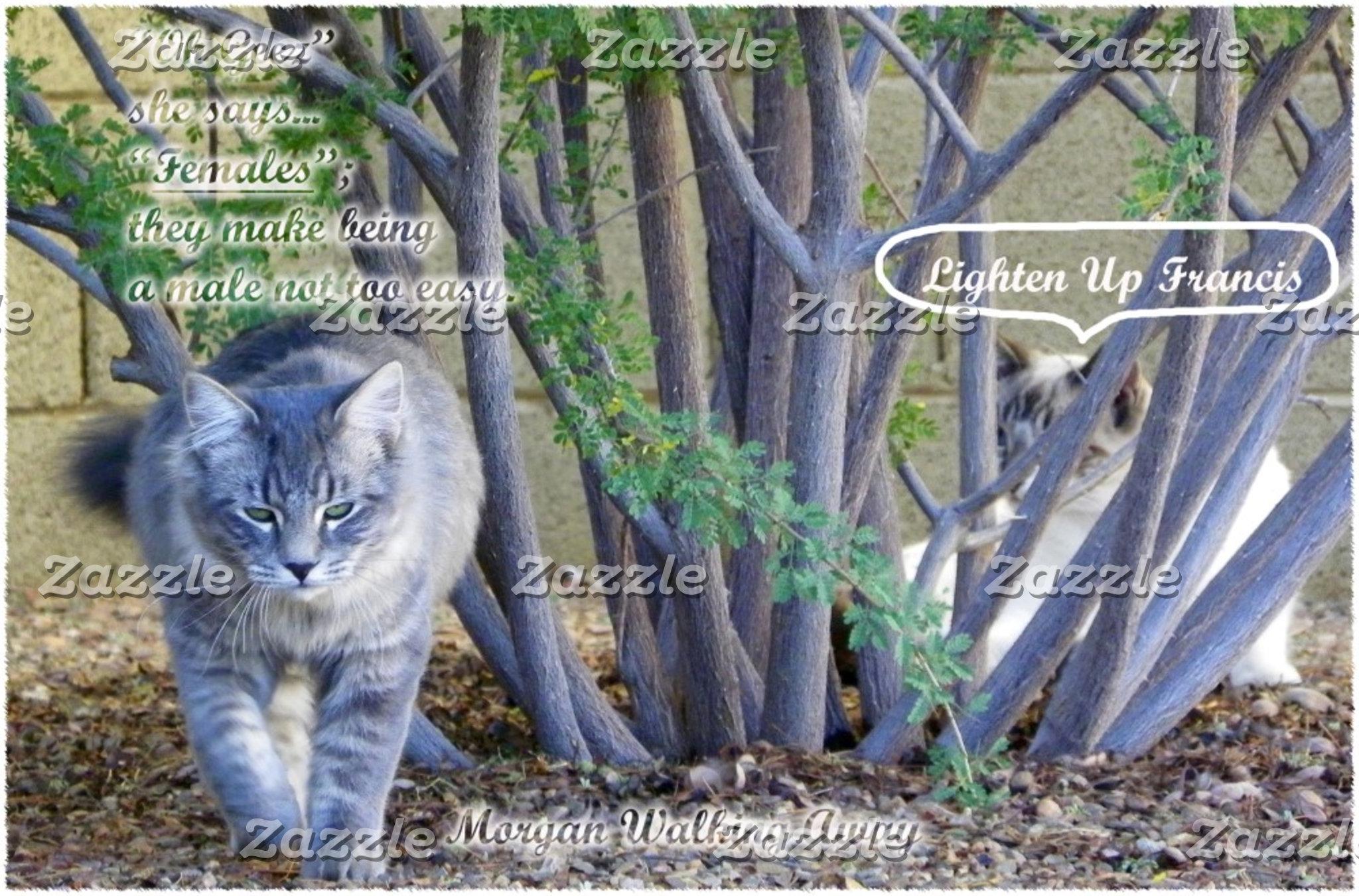 Neighboring Kitties That Visit Us