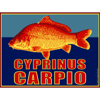 Carp (cyprinus carpio) in superhero colors