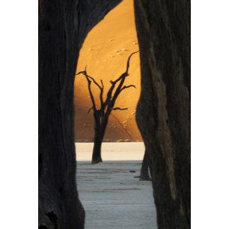 Namibia, Namib-Naukluft Park, Sossusvlei. Dead