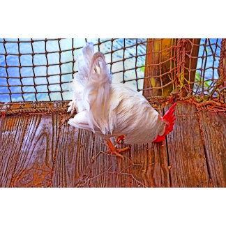 white rooster on dock hdr poultry