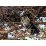 100_1709.jpg colony cat, woodland thicket, snow by