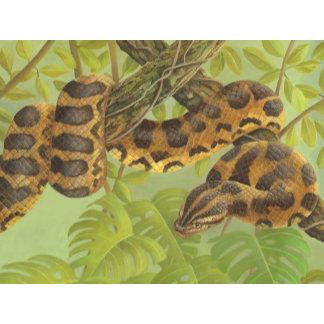 Snakes/Reptiles