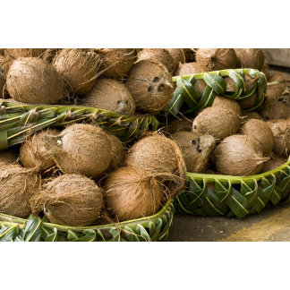 Polynesia, Kingdom of Tonga. Display of coconuts
