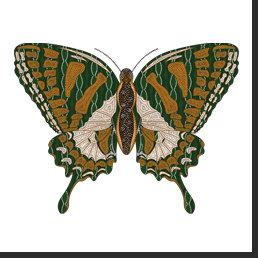 Aboriginal Swallowtail