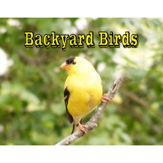 Backyard Birds 12 Month Calendar 2015