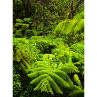 Hawaii, Big Island, Lush tropical greenery in