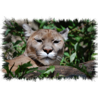 Cougar Predator