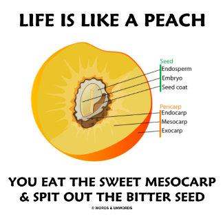 Life Is Like A Peach Eat Sweet Mesocarp Spit Seed