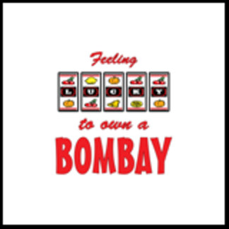 Feeling Lucky to Own a Bombay