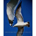 Gull's of Battery Park, New York City.jpg