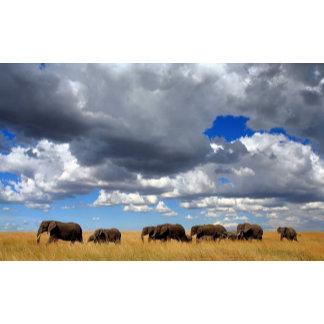 African elephant herd in Seronera Valley