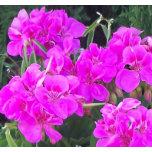 pretty in pink2.jpg