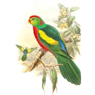 Goulds Parrot Birds