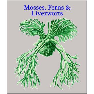 Mosses, Ferns & Lichens