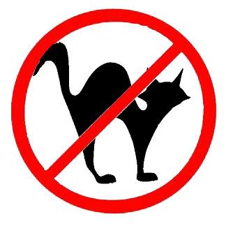 No Cats?!