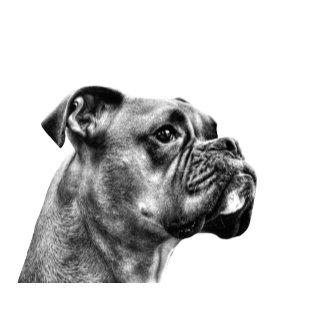 Boxer dog profile